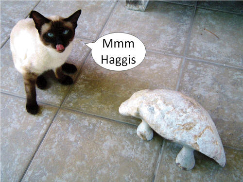 Haggis Scoticus and Parsley [Our Siamese Cat] by Cliff Fraser