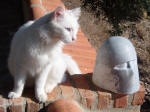 Diesel the Cat and The Beautiful Fatima 5  - A marble sculpture by Cliff Fraser [and Diesel the cat]